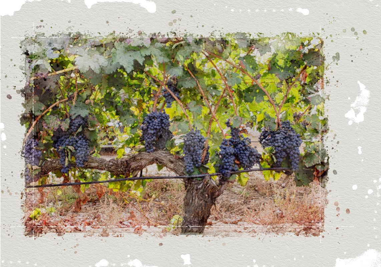 Una viña sin presiones