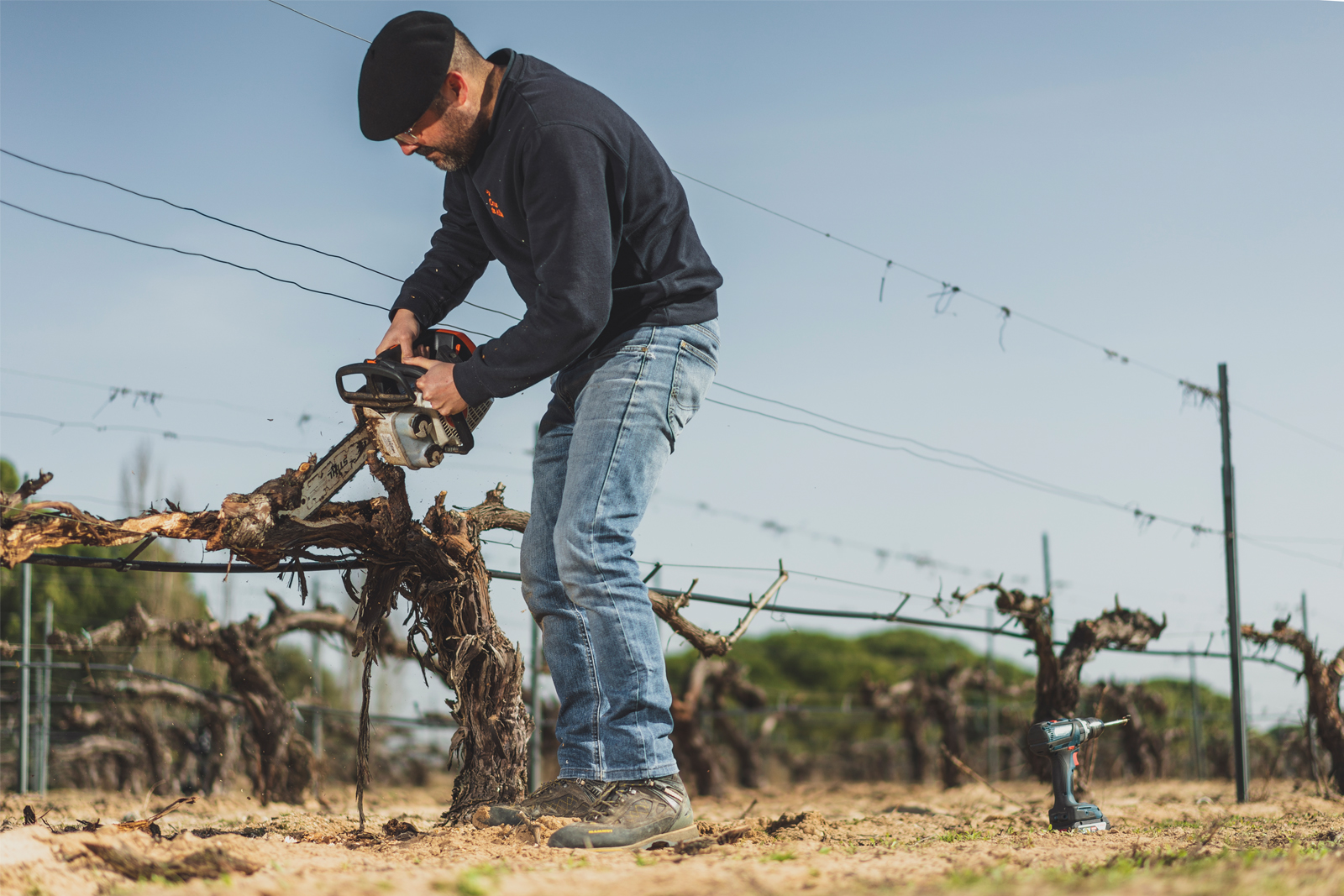 Recuperando viñas viejas afectadas por yesca